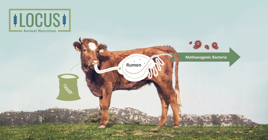 What's The Beef with Cow Burps?